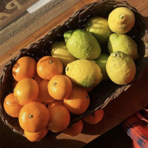 今年も‼️広島県呉市下蒲刈島産の みかん🍊とレモン🍋が届く季節になりました😋✨
