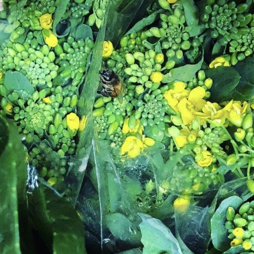 菜の花と一緒に雨宿り🐝