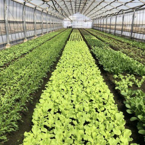 今日から、新しい農家さんの野菜が増えました‼️